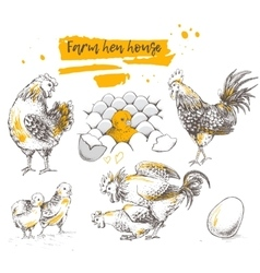Set of farm chicken family vector image vector image