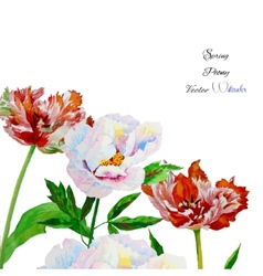Background with pink white peony2-01 vector image