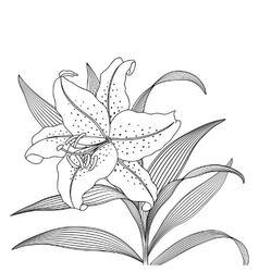 Beautiful lily flower on a light background vector