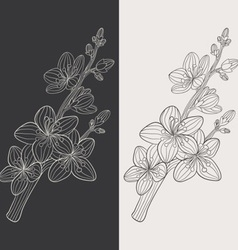 Cherry Blossom Flower vector image vector image