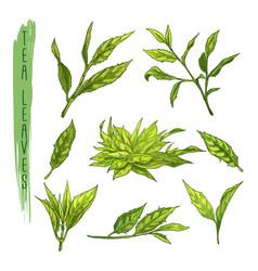 colourful set of tea leaves elements set vector image vector image