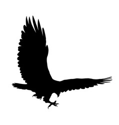 eagle flying silhouette isolated on white vector image