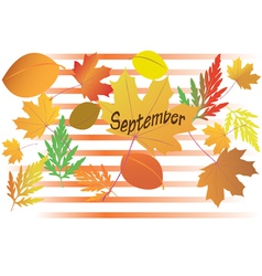 Autumn leaves - september month vector