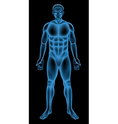 Male body vector image vector image