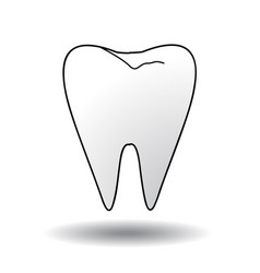 tooth on white vector image