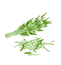 Fresh water spinach on a white background vector
