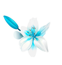 beautiful white and blue flower isolated vector image vector image