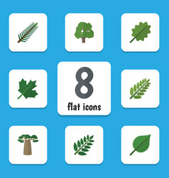 Flat icon ecology set of spruce leaves acacia vector