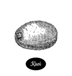 hand drawn sketch style fresh kiwi vector image