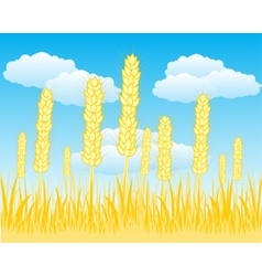 Field with ripe wheat vector