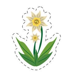 cartoon daffodil flower image vector image