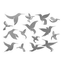 icons of colibri humming bird vector image vector image