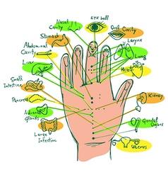 Reflexology hand chart vector