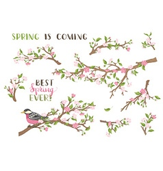 set of spring branches isolated on white vector image