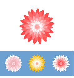 Chrysanthemum or gerber daisy flower vector