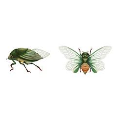 Green grocer vector