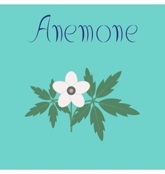 Flat on background flower anemone vector