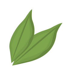 Leaves plant spring nature foliage garden vector
