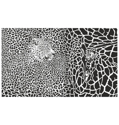Background with leopard and giraffe vector image