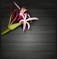 Tropical flower on a dark wooden background vector