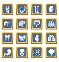 Human organs icons set blue vector