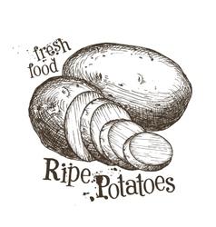 Ripe potatoes logo design template fresh vector