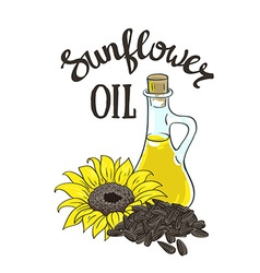 hand drawn yellow sunflower sunflower seeds and vector image