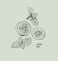 Lemon lime and mint ink sketch set vector