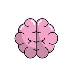 Brain human anatomy organ of inteligence vector