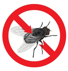 Flies banned Sign prohibited vector image