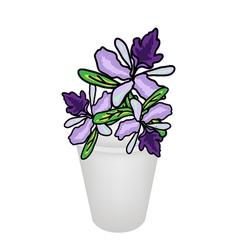 Beautiful Vanda Orchid in A Flower Pot vector image