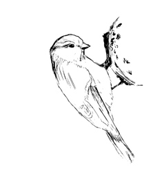 Sketch tit bird vector