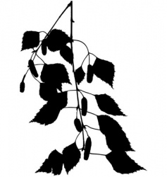 birch branch silhouette vector image