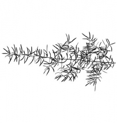 branch silhouette vector image