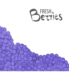 Fresh blueberries vector image