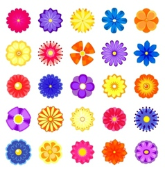 Colorful flowers set vector image vector image