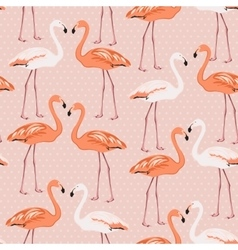 Flamingo birds couple pattern on pink polka dot vector