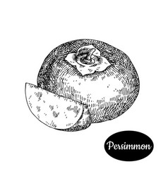 Hand drawn sketch style fresh persimmon vector