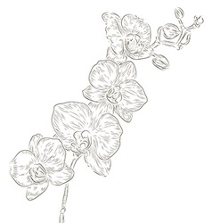 Hand drawn orchid sketch vector