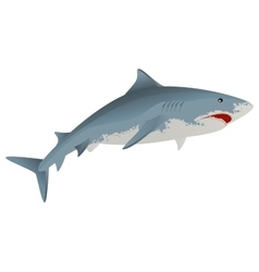 Big white shark marine predator vector
