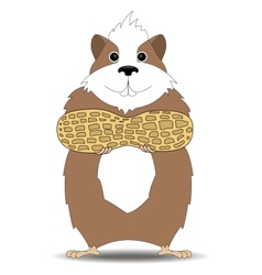 Hamster holding in the paws of peanuts vector
