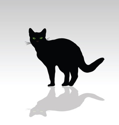 Cat with green eye vector