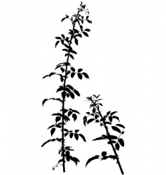 Shrub silhouette vector