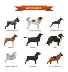 Dog breeds set isolated on white background vector