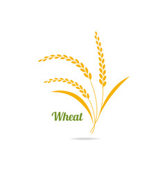 Icon of wheat vector
