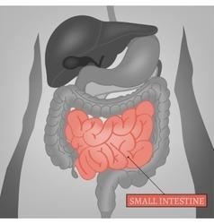 Body Internal Parts vector image