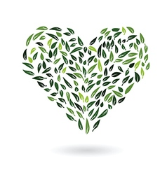 Heart from green leaves vector