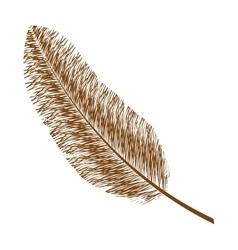 Feather design isolated bohemic plume vector