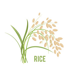Grains in the flat style vector