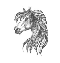 Profile portrait of purebred andalusian mare icon vector image